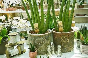 Schöne übertöpfe Für Drinnen : t pfe deko zubeh r f r in und outdoor daglfinger ~ Watch28wear.com Haus und Dekorationen