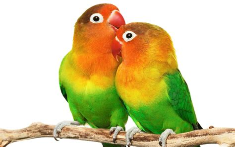 136 Parrot Hd Wallpapers  Backgrounds  Wallpaper Abyss