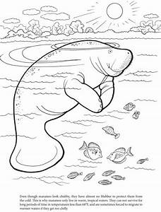 Manatee Coloring Pages Getcoloringpagescom