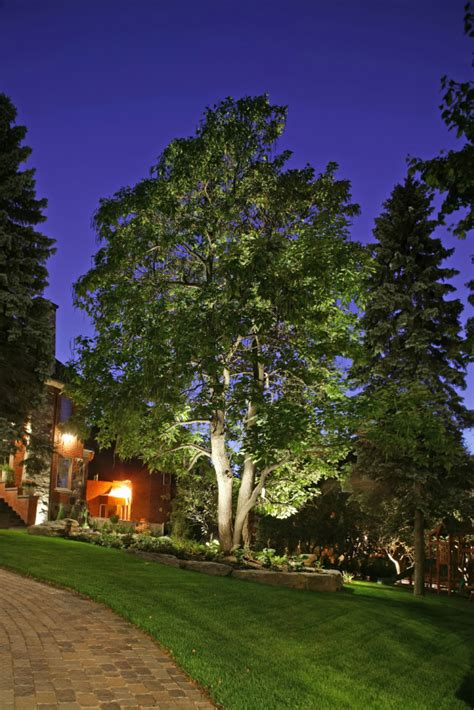 5 dramatic landscape lighting ideas for your home