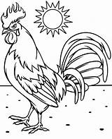 Rooster Coloring Pages Sheet Bird Backyard Topcoloringpages Birds sketch template