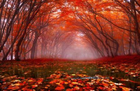 autumn rain  nature background wallpapers