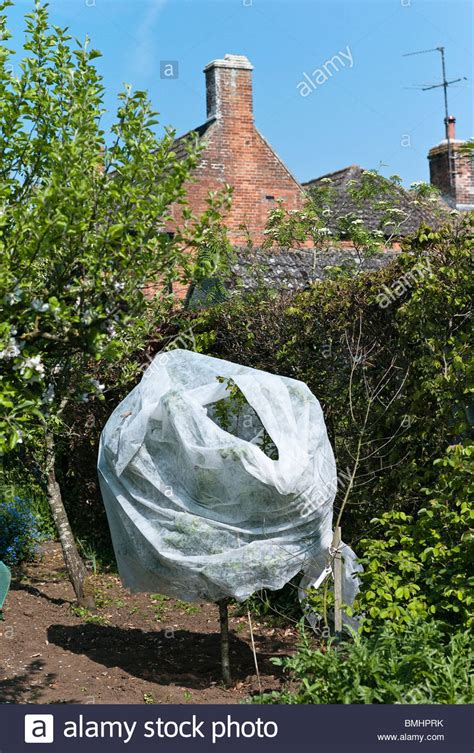 obstbäume vor schützen protection stockfotos protection bilder alamy