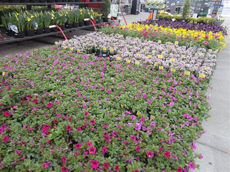 lowes reduced plants coupon booklet ship saves