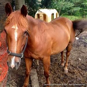 2 Chevaux Occasion : cheval de r ve vente 2 chevaux vendre ~ Medecine-chirurgie-esthetiques.com Avis de Voitures