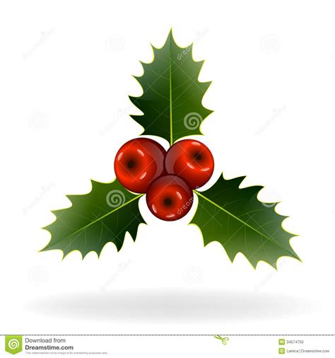 holly berries  white background christmas decorations