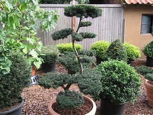 gehlhaar gartenbaumschule hannover gt pflanzen With feuerstelle garten mit bonsai eibe