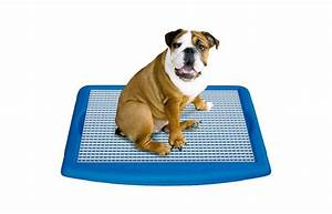 Puppy pad holder image for simple solution puppy training for Indoor dog bathroom solutions