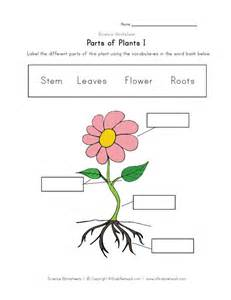 Plants Worksheets Gallery For Gt Parts Of A Plant For To Label