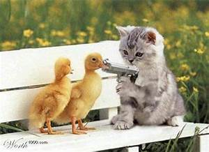 Funny & Cute Cats: Funny Cats With Guns Wallpapers