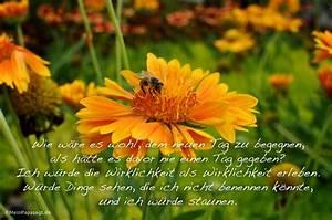 Liebe Ist Wie Eine Blume : wie w re es wohl dem neuen tag zu begegnen als h tte es davor nie ~ Whattoseeinmadrid.com Haus und Dekorationen