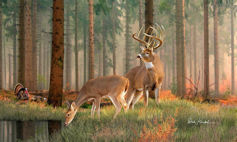 whitetail deer by dale kunkel official site