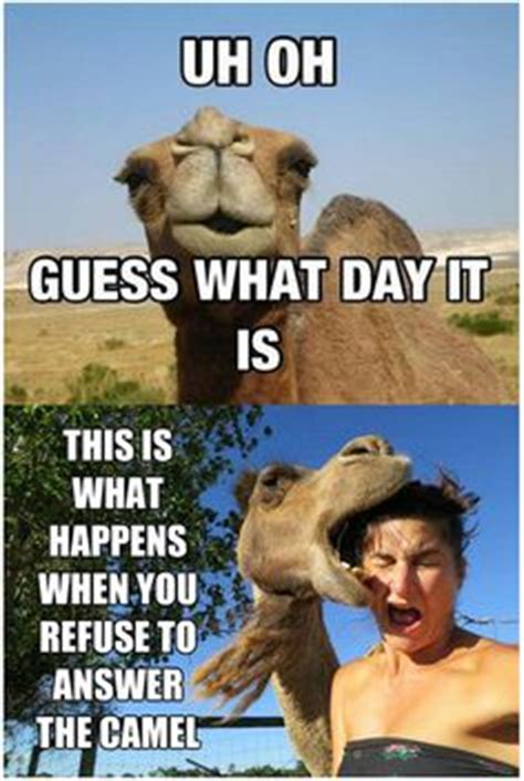 Wednesday Hump Day Meme - days of the week quotes on pinterest hump day camel happy thursday and hump day