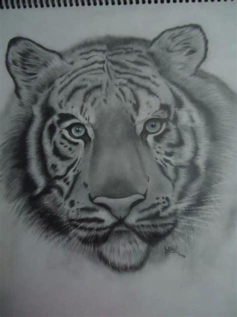 tigre blanco lapiz portamina   sobre papel blanco