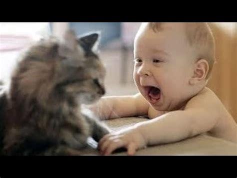 de risa de bebes se rien de los gatos youtube