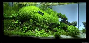 Liter Berechnen Aquarium : closer flowgrow aquascape aquarien datenbank ~ Themetempest.com Abrechnung