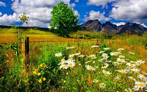 Beautiful Sceneries Of Nature For Wallpaper Spring Landscape Chamomile Flowers And Green Grass Mountains Blue Sky And White Cloud