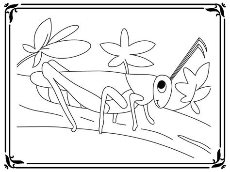 coloring pages   grasshopper realistic coloring pages