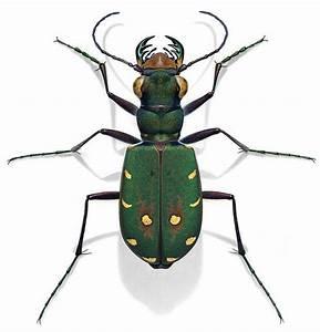 Insekten Im Haus : ber ideen zu insekten auf pinterest k fer ~ Lizthompson.info Haus und Dekorationen