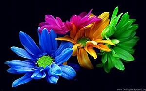Colorful Flower Iphone Wallpapers : Nature Wallpapers ...