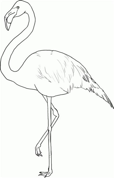 flamingo coloring page art pinterest coloring