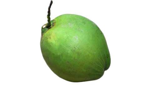 green coconut coconut tree dwarf green variety