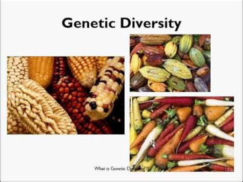 Get What Is Plant Diversity Background