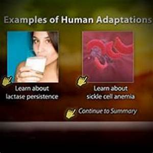 Recent Adaptations in Humans