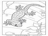 Gecko Leopard Coloring Pages Colouring Printable Tokay Getcolorings sketch template