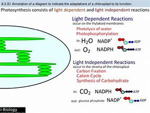 Bioknowledgy 8 3 Photosynthesis Ahl