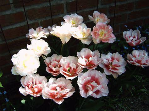 kommt der frühling bald kommt der fr 252 hling foto bild pflanzen pilze flechten bl 252 ten kleinpflanzen