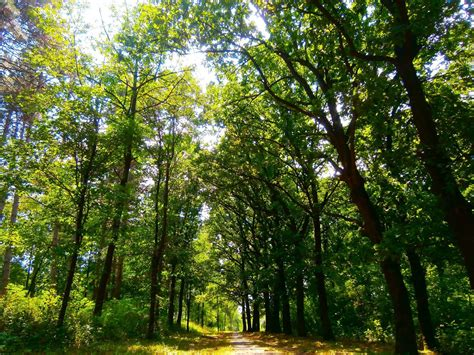 nature, Forest, Park, Green, Serbia Wallpapers HD ...
