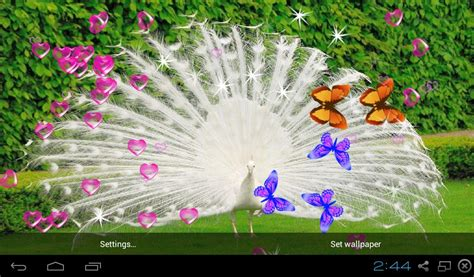 3d Peacocks Live Wallpapers  Android Apps On Google Play