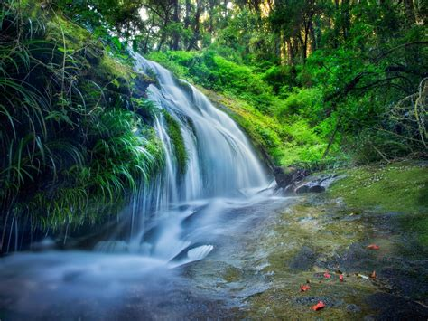 forest rocks trees plants waterfall river