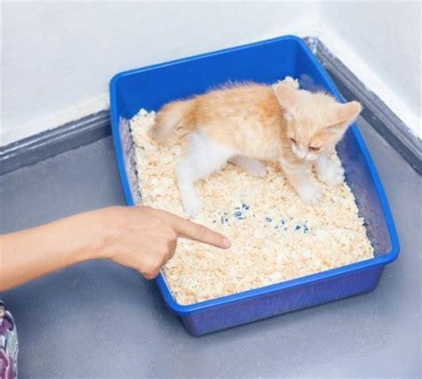 Kleines Katzenklo kleines katzenklo wohin mit dem katzenklo der beste platz f r die