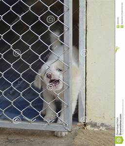 Lonely Dog In Cage Stock Photos - Image: 32524163