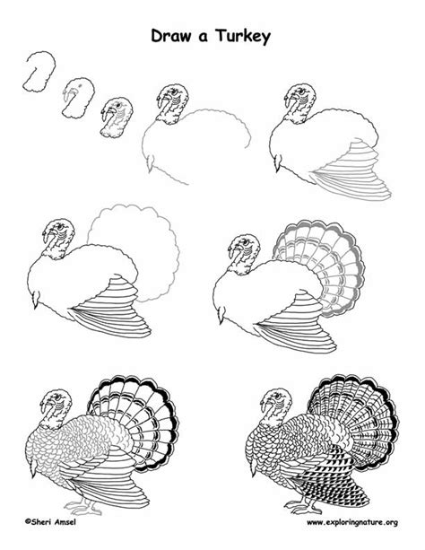 turkey domestic drawing lesson