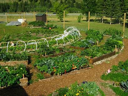 Permaculture Garden Community Gardening Canmore Growing Greenmylife