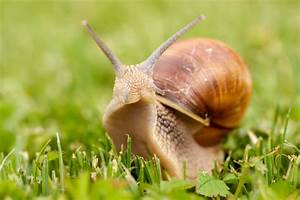A Simple Guide To Britain U0026 39 S Snails