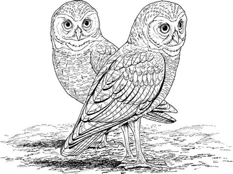 Complex Bird Coloring Pages Free Coloring Complex Bird