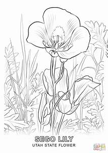 Louisiana State Flower Coloring Page Coloring Pages