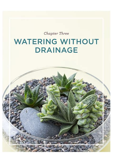 how often do you water succulents succulent care tips for growing succulents succulents and sunshine