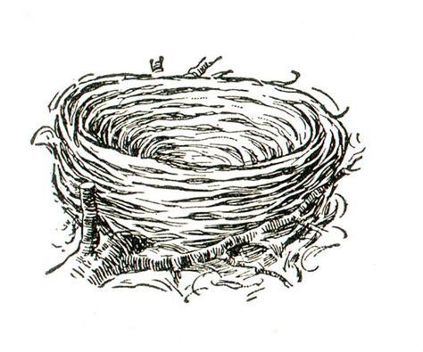 bird nest coloring book pinterest nests birds