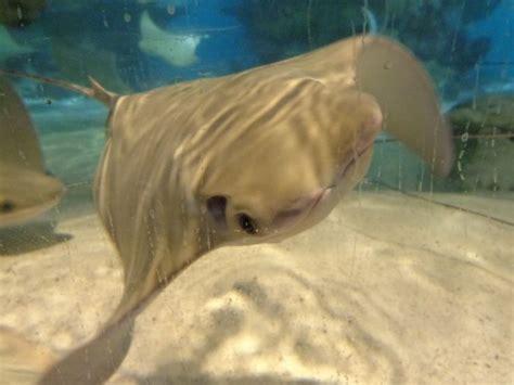 New England Aquarium Boston MA