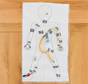 Circulatory System Lesson Plans For Elementary