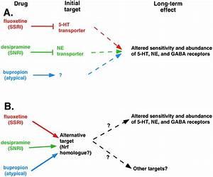 How Do Antidepressants Work  Prospects For Genetic Analysis Of Drug Mechanisms  Cell