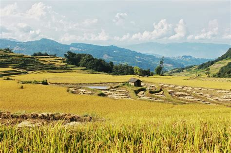 yuanyang rice terraces southeastern promises yuanyang rice terraces a photo