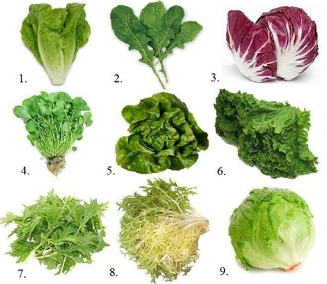 Kale, The King Of The Greens  Leafy Green Kale That Is