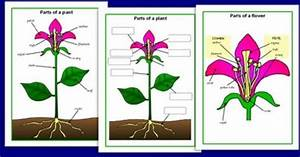 Simple Diagram Of A Plant For Kids