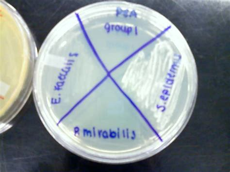 pea  phenyl ethyl alcohol  plate inoculated